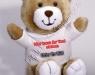 teddy-800x600